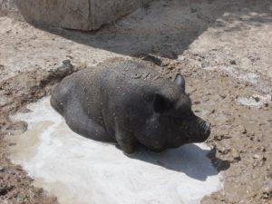 Sally Sue enjoying mud baths